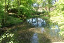 A river scene in the woods563a1f985e17a.JPG